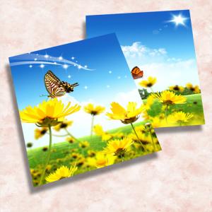 Postcards 8.5×11