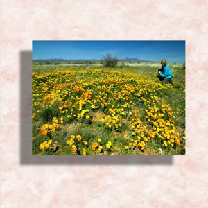 Postcards 3×4