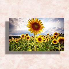 Postcards 3×5